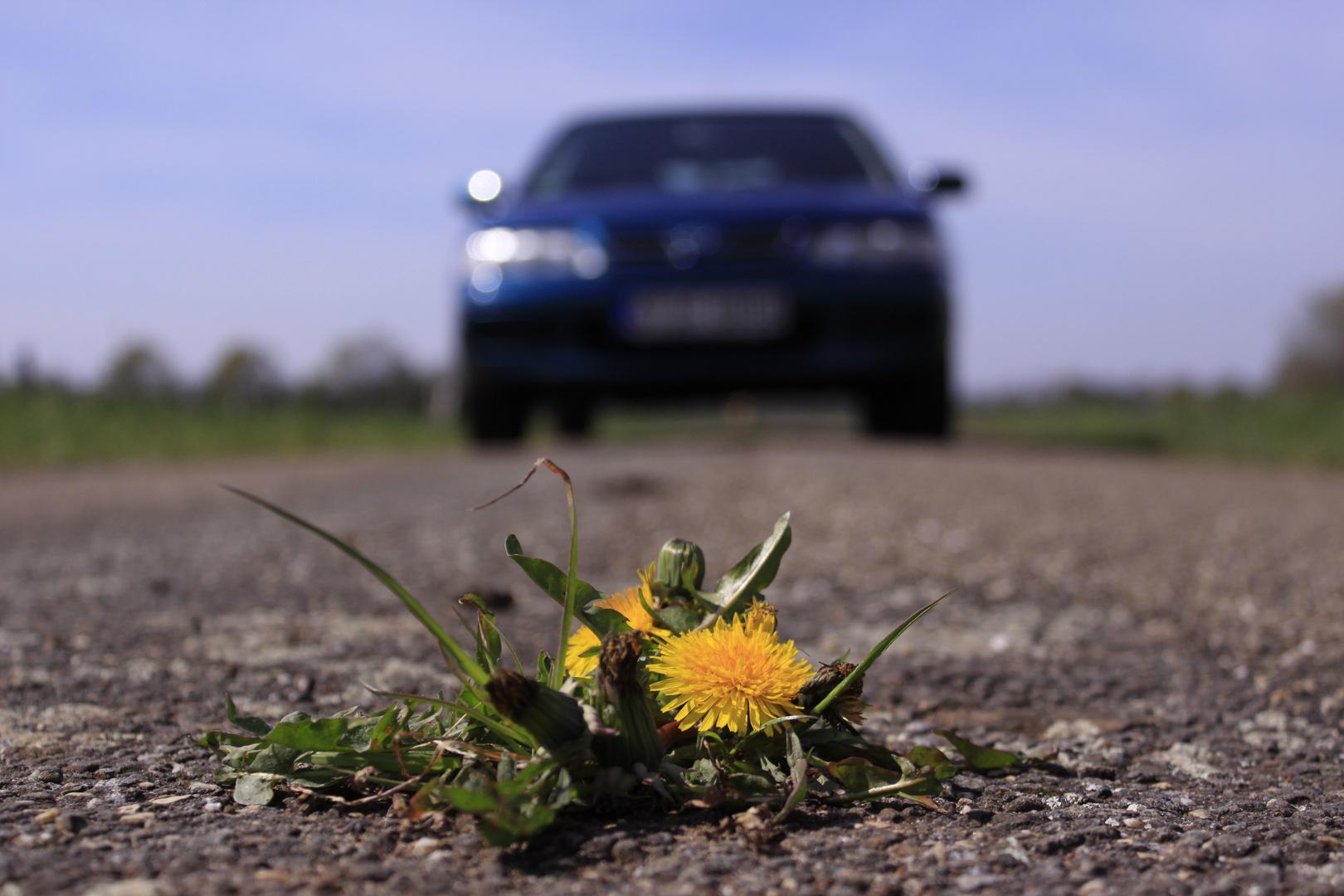 Die Natur findet immer einen Weg!