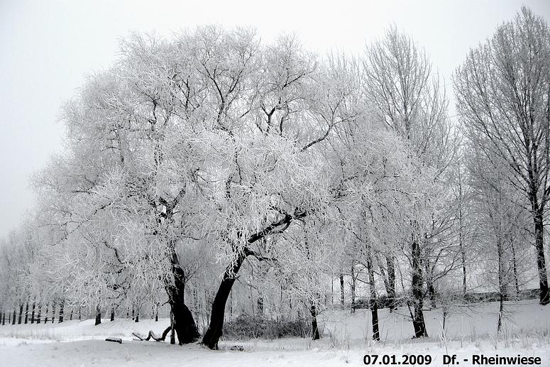 Die Natur im Winter Düsseldorf - Rheinwiese