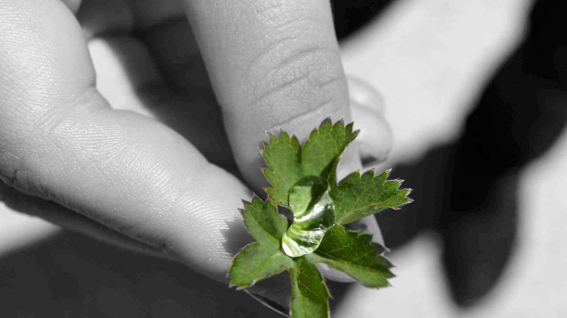 Die Natur in unseren Händen