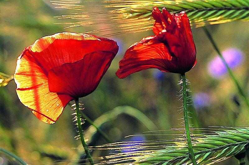 Die Natur ist ein grandioser Maler...