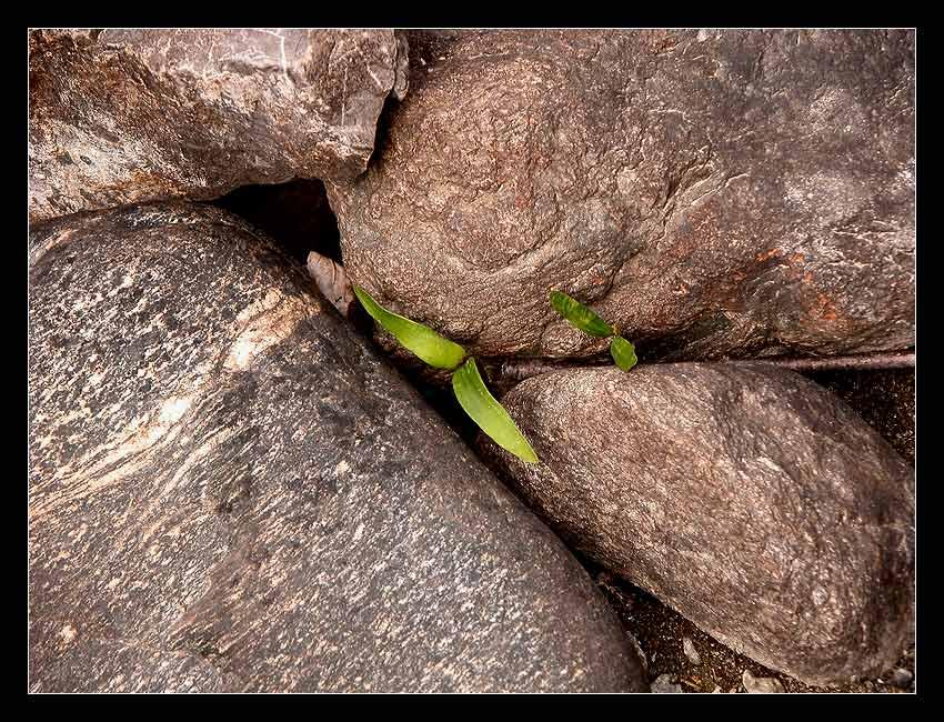 Die Natur ist stärker als der dickste Stein