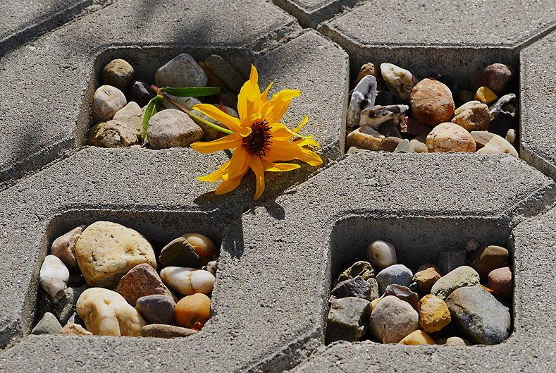 Die Natur muss dem Beton weichen...