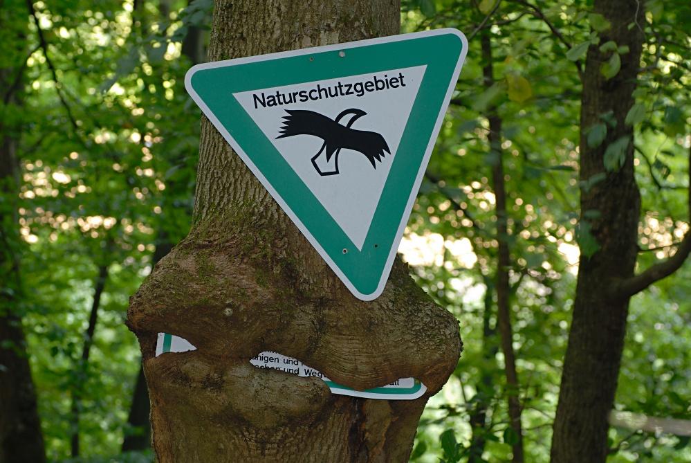 Die Natur rächt sich . . . .