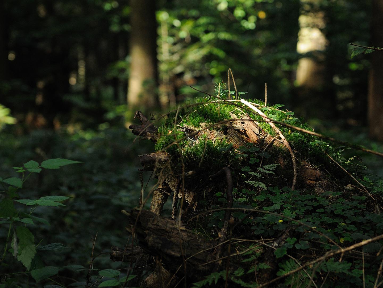 Die Natur richtet es...