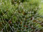 Die Natur schmückt sich mit Juwelen