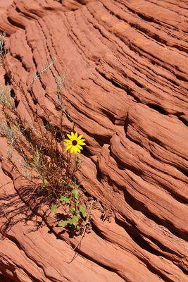 Die Natur sucht sich ihren Weg