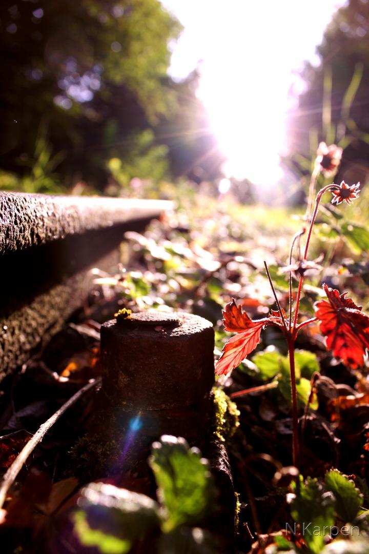 Die Natur übernimmt