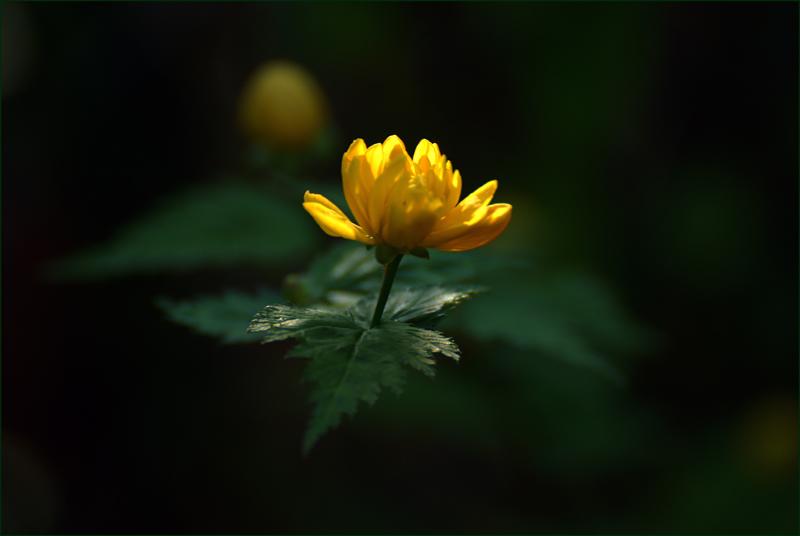 die Natur zaubert..........