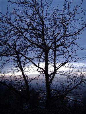 Die Nebel von Avalon...