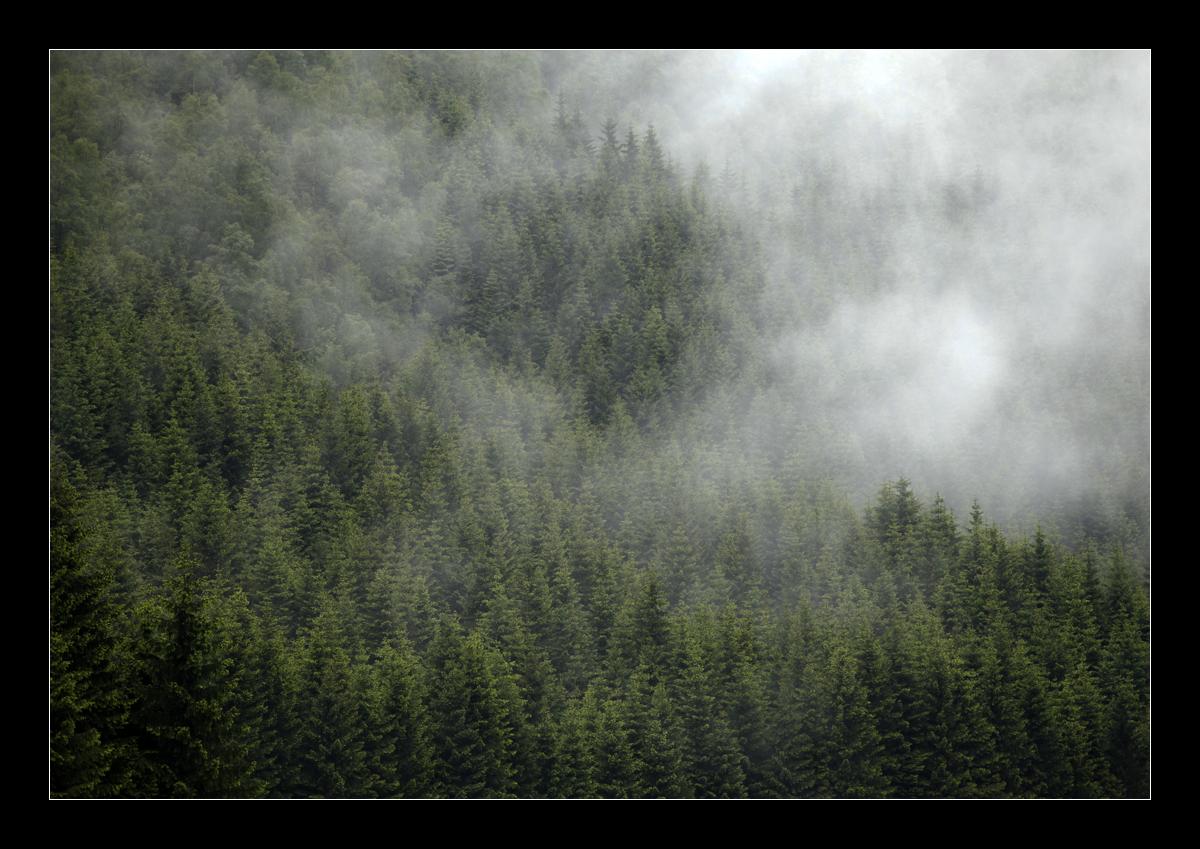 Die Nebel ziehen...