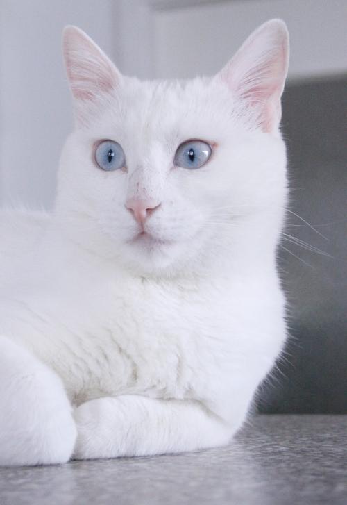 die neue Alpina-Katze