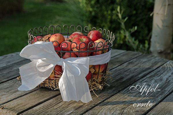 Die neue Apfelernte