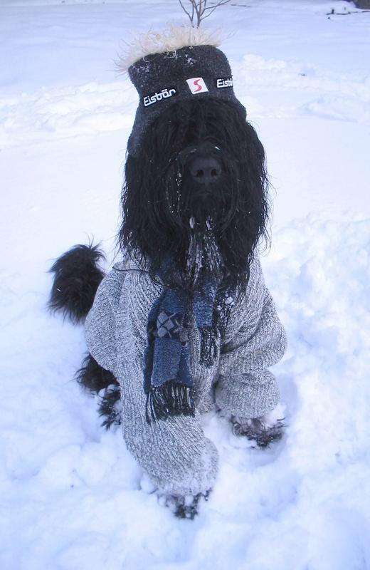 Die neue Briard-Winterkollektion....