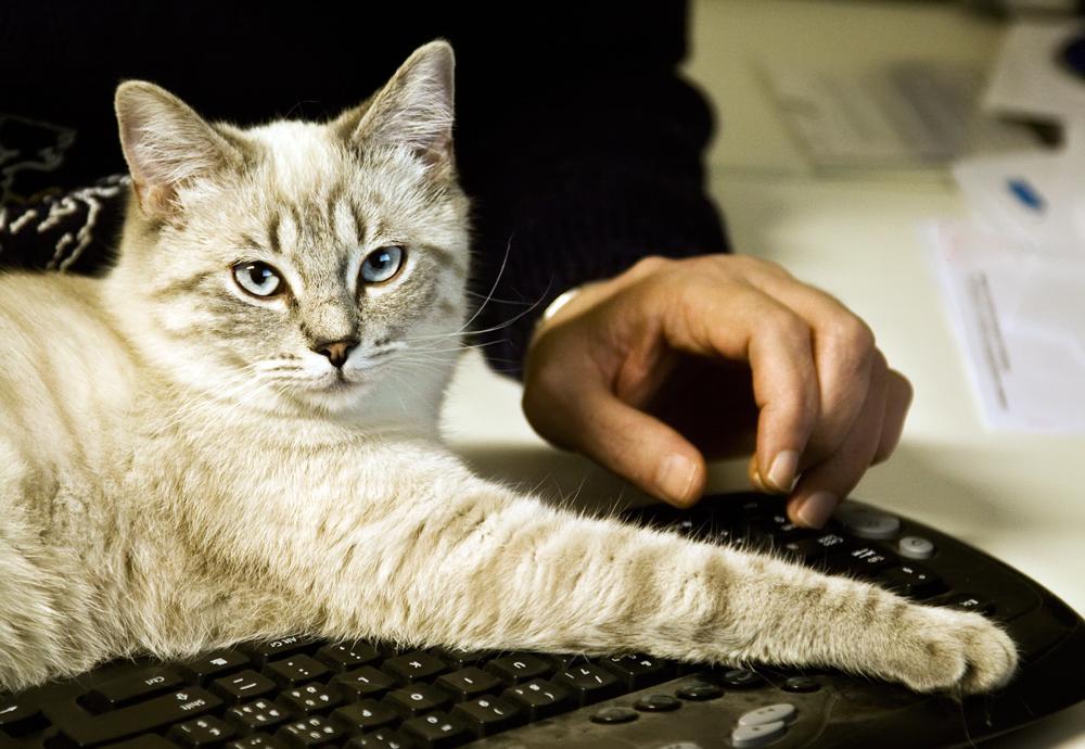 Die neue Sekretärin meines Mannes :-))