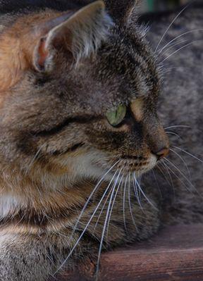 Die neun Leben einer Katze - 01 Aufmerksamkeit