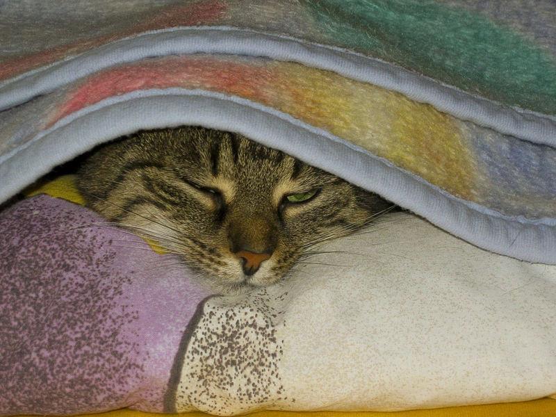 Die neun Leben einer Katze - 05 kuschelig Dösen