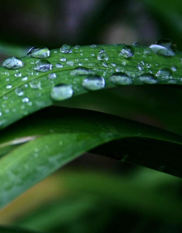 Die Oberflächenspannung zwingt Wasser....