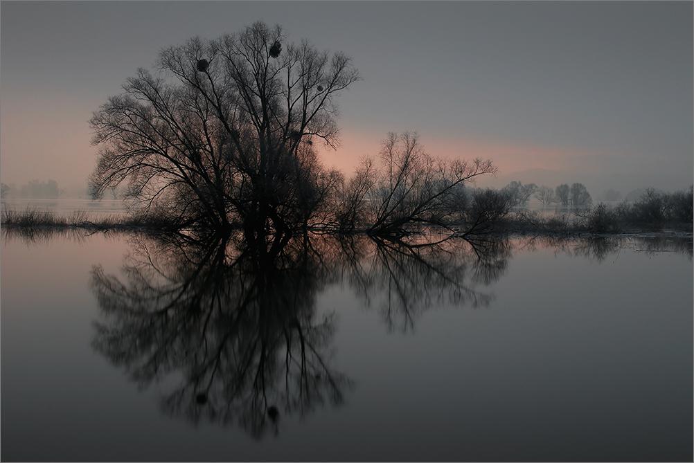 Die Oder (3)