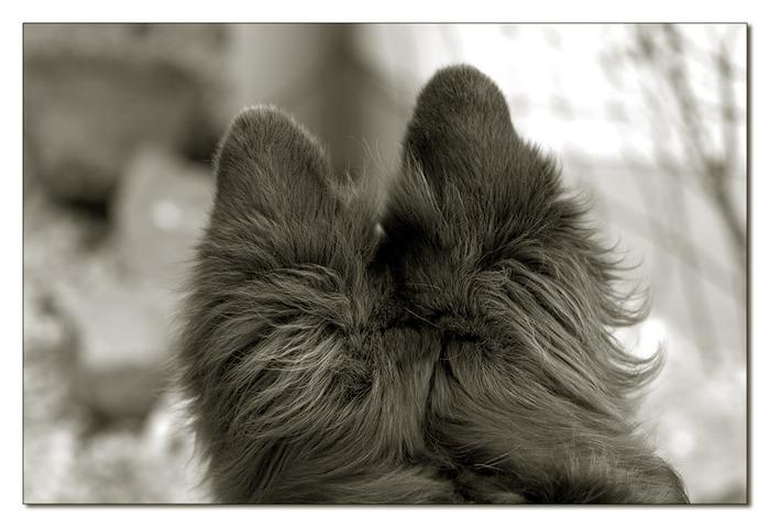 Die Ohren gespitzt!
