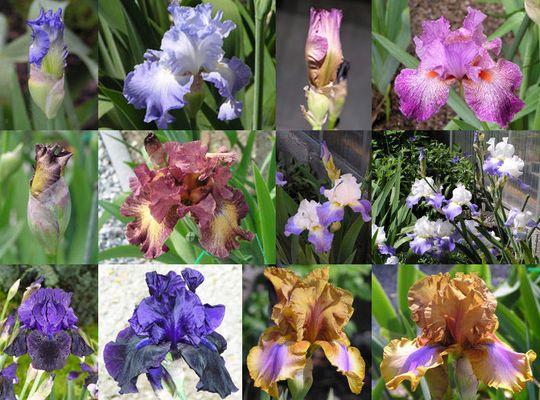 Die Orchidee des kleinen Mannes