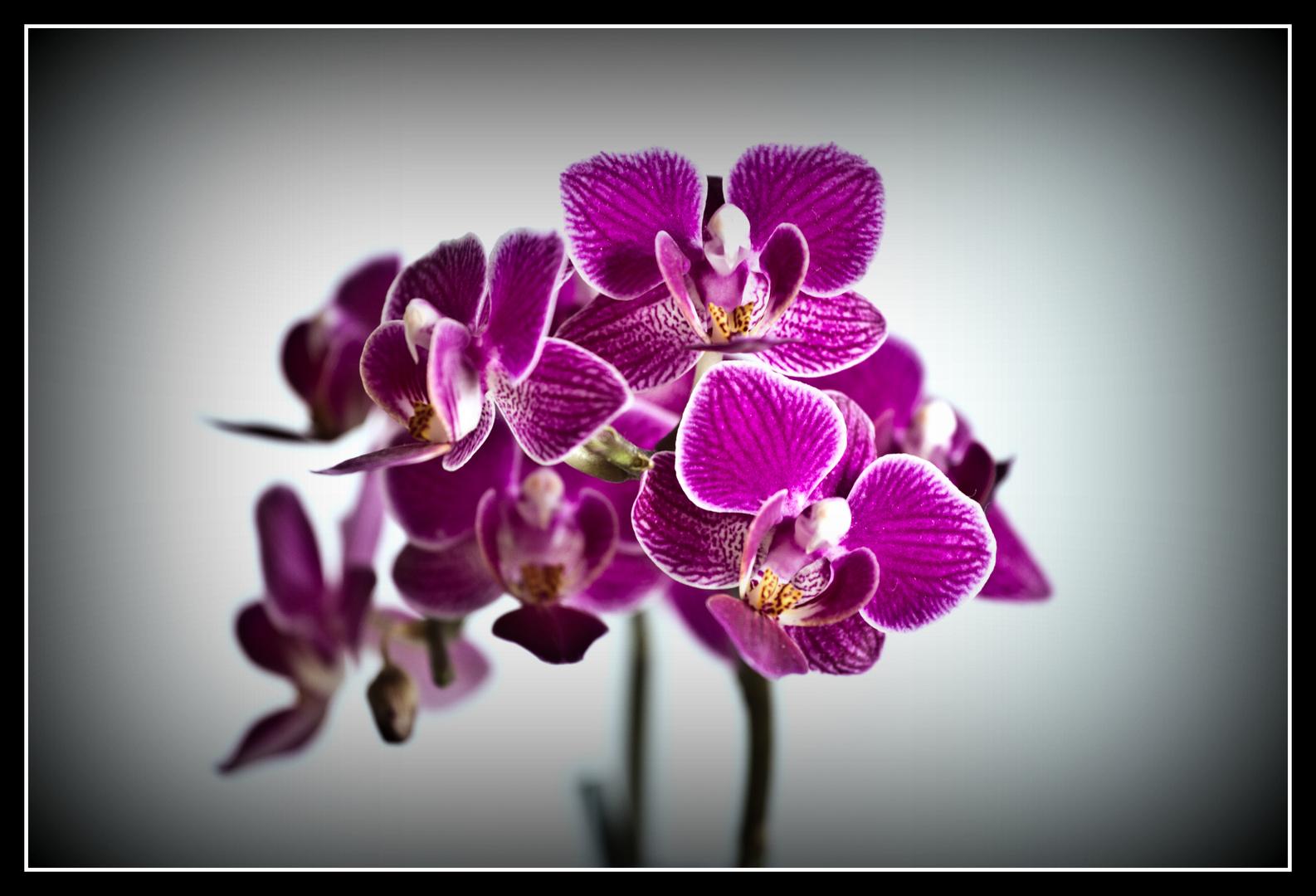 Die Orchidee Teil2