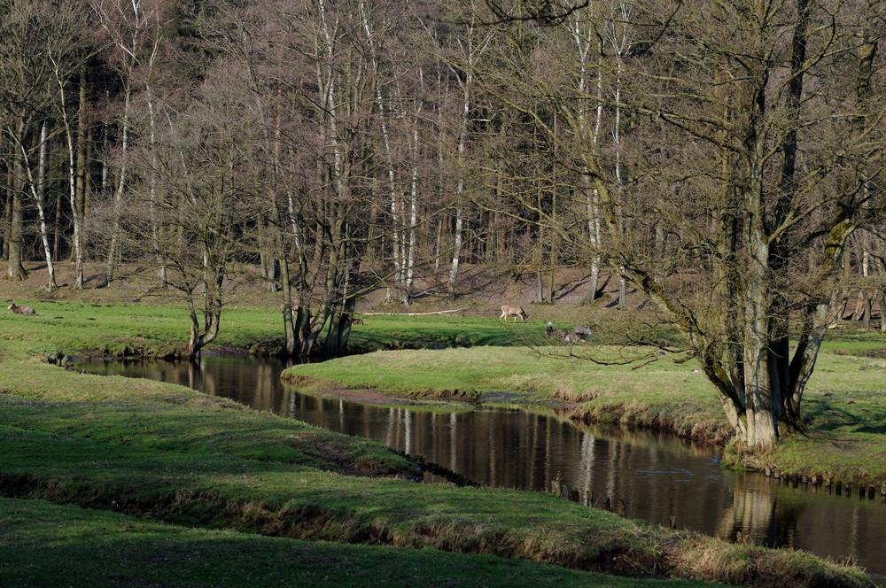 Die Osterau mäandert durch den Wildpark Eekholt