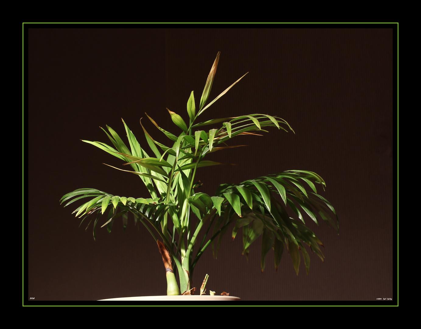 die Palme...