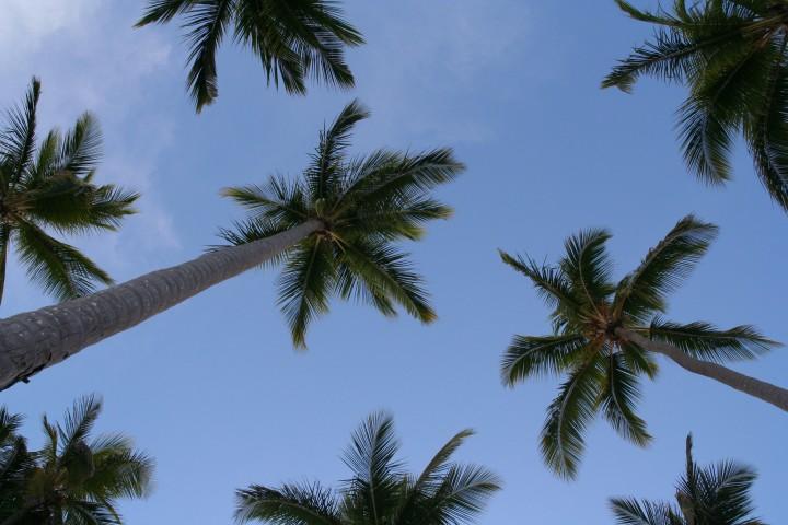 Die Palmen