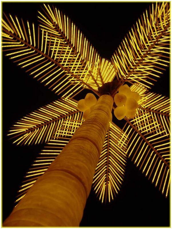 Die Palmen in Sharm el Sheikh