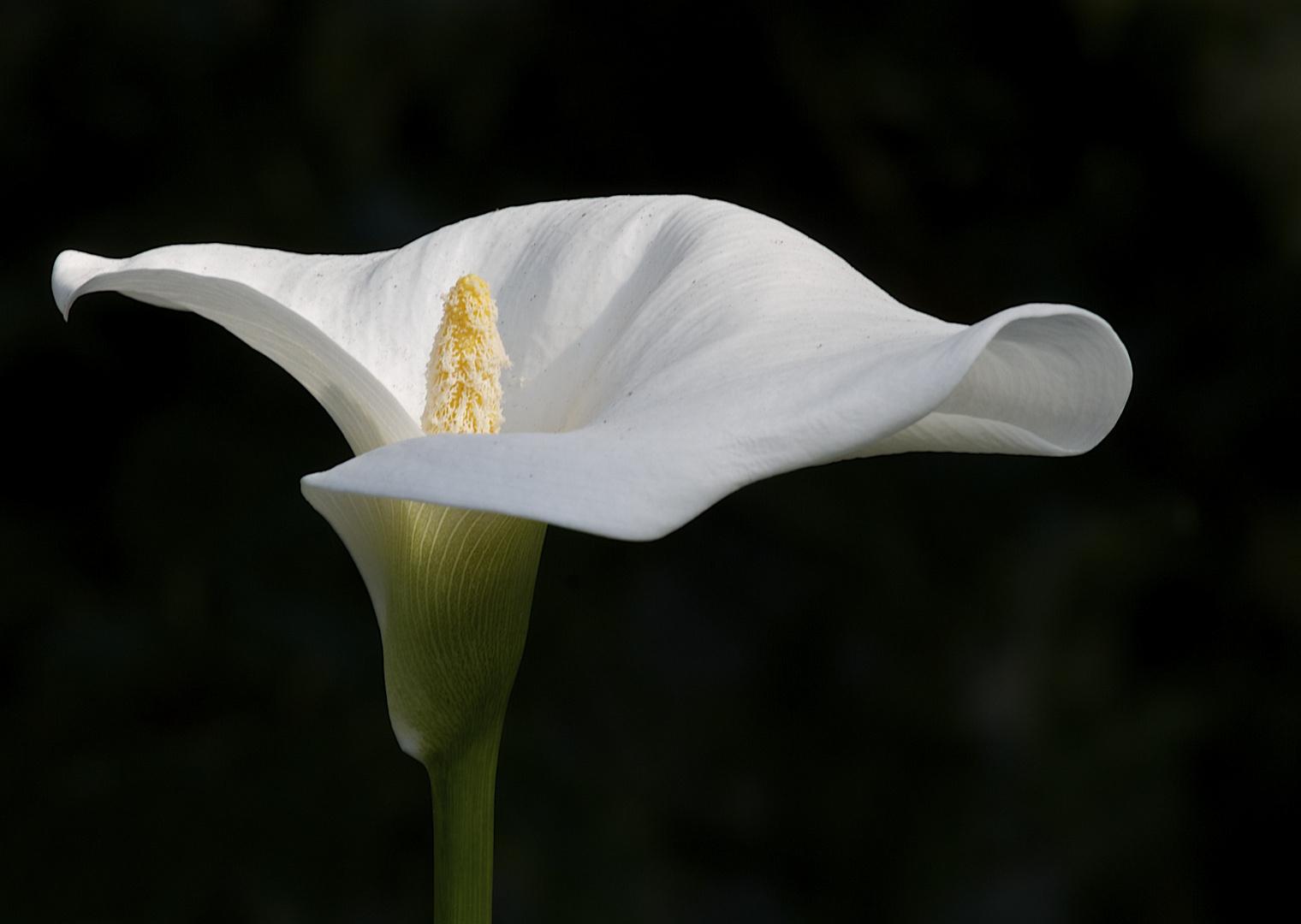 Die perfekte Blüte.