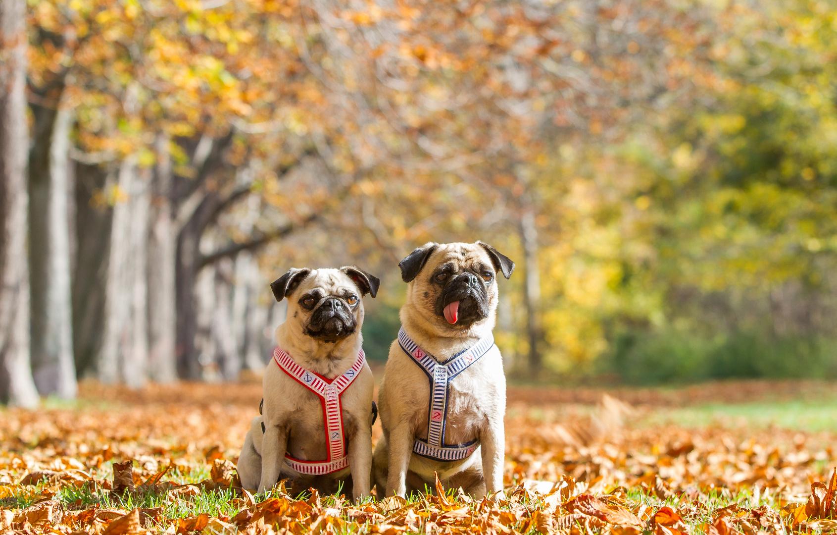 Die perfekte Herbst-Location :-)
