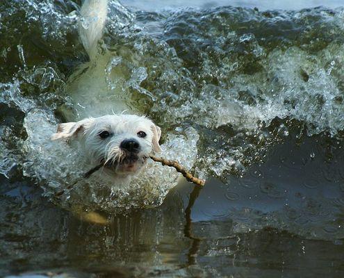 Die perfekte Welle und Beaver