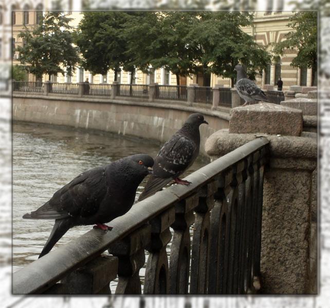 Die Petersburger =)