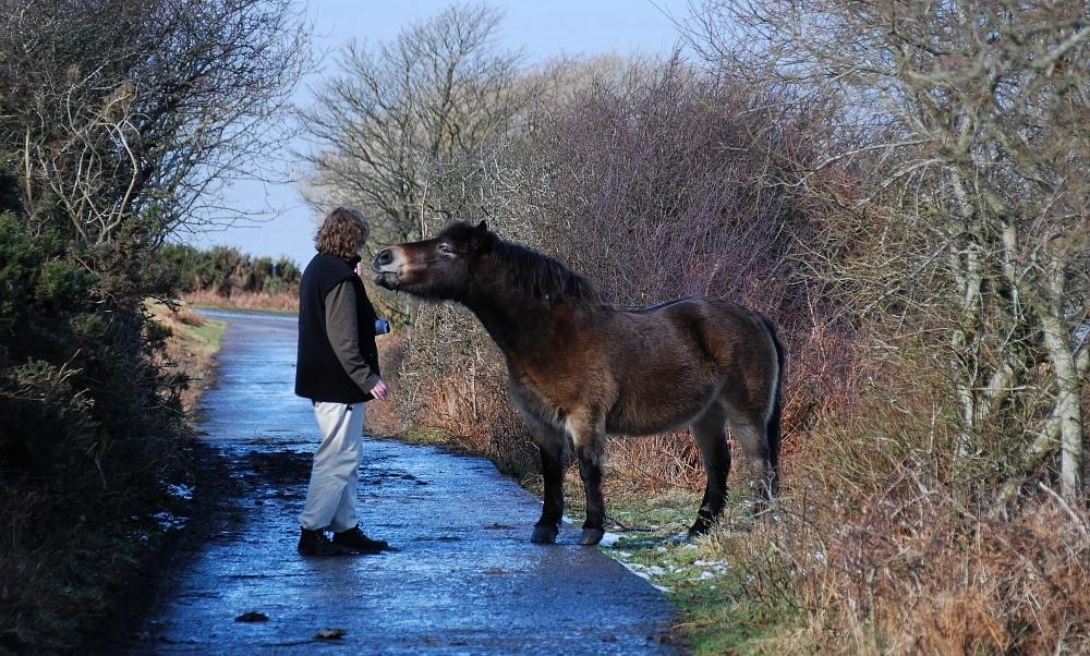 Die Pferdeflüsterin II