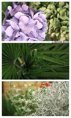 Die Pflanzen im Hinterhof
