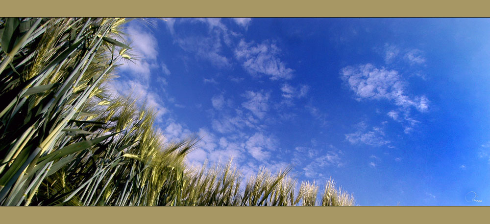 Die Phantasie etwas in den Wolken sehen zu können