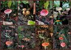 Die Pilz Collage !