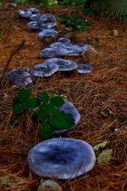 Die Pilzarmee