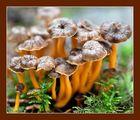 Die Pilze