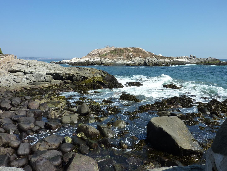 Die Pinguin-Insel