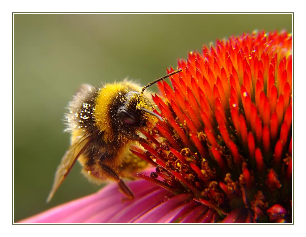 ~Die Pollennase~