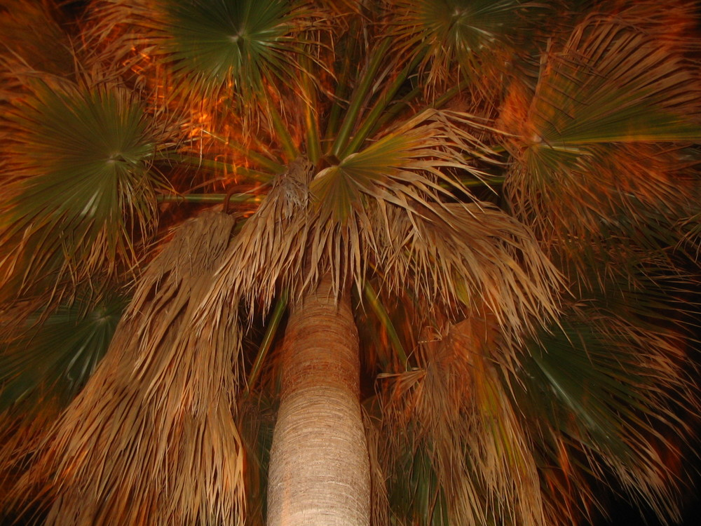 Die Pracht der Palme
