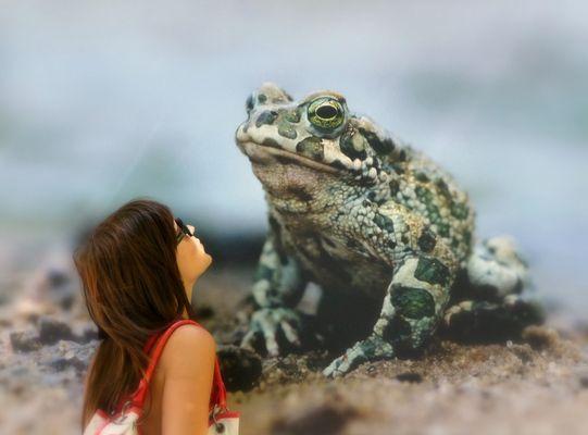 Die Prinzessin und der Froschkönig