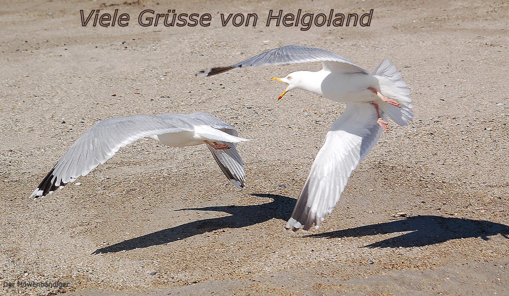 Die Reise nach Helgoland