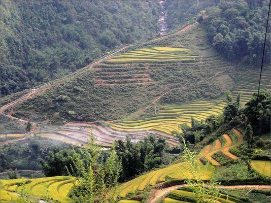Die Reisterrassen