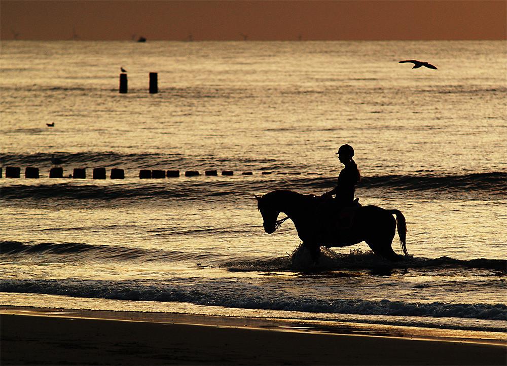 Die Reiterin und die Möwe