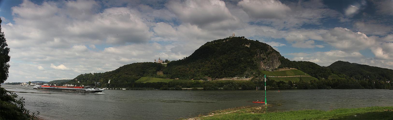 Die Rheinaue bei Bonn