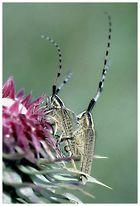 Die richtigen Käfer auf der richtigen Pflanze