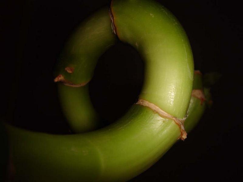 Die Riesen Schlange