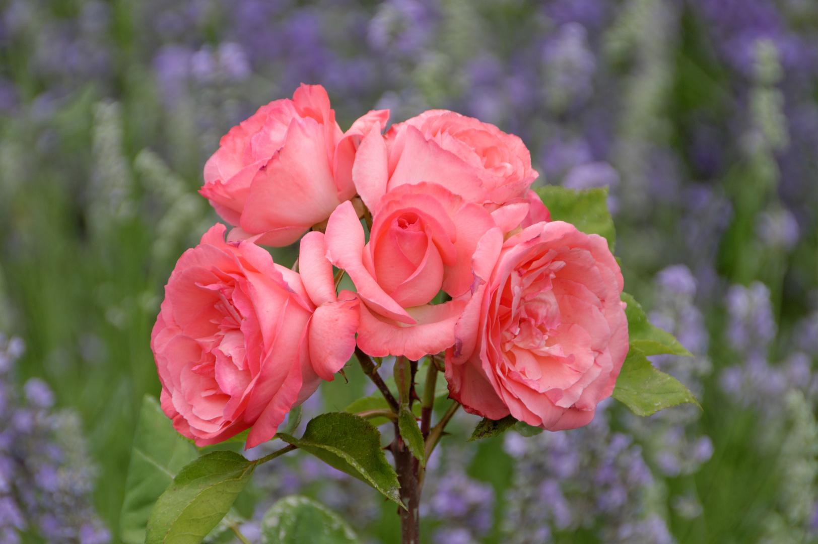 """Die"""" Rose Axel"""" aber nicht """"Axl Rose"""""""